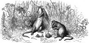 rat-ville-champs